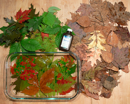 Glycerin leaves