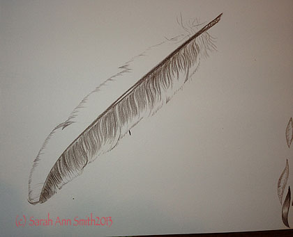 Just the first side sketched in, and a barest of outline on the upper side of the feather