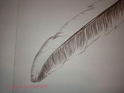 Detail of feather, partially done