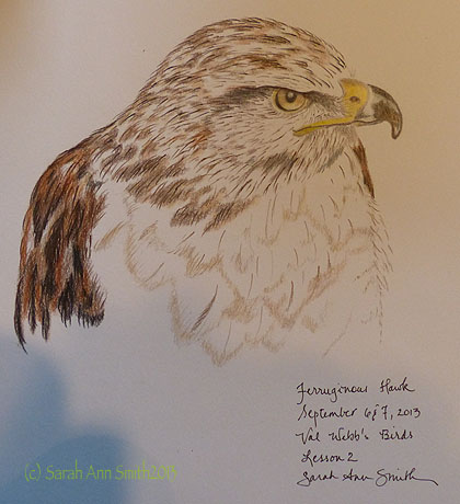 Completed colored pencil drawing of Ferruginous Hawk.  Instruction was for the head, hasn't yet covered white feathers, but I wanted to try anyway!