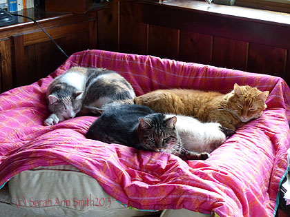 The cats like the new chair...all FOUR of them on the turned-down back cushion!