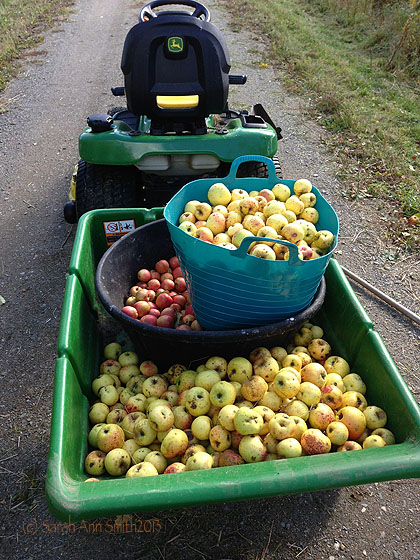 Guess what I did today?  And yes, that is a 7 cubic yard cart behind the lawn tractor nearly full of apples.  From just two trees.  That still have more apples.