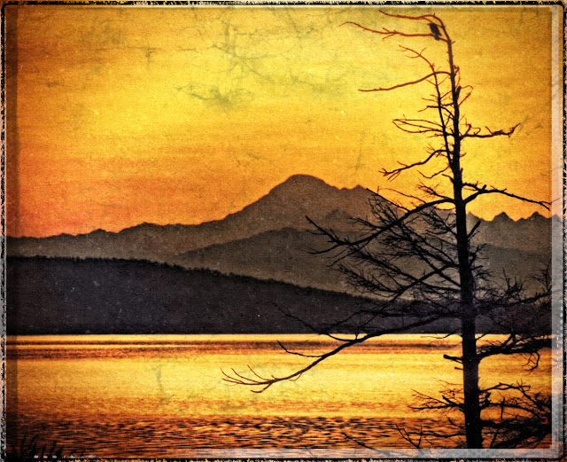 Marie's digital imagery; the photo is of Mount Baker, and if I recognize that tree on the right, taken at the Anacortes Ferry Landing, probably while waiting for the ride home to the island.