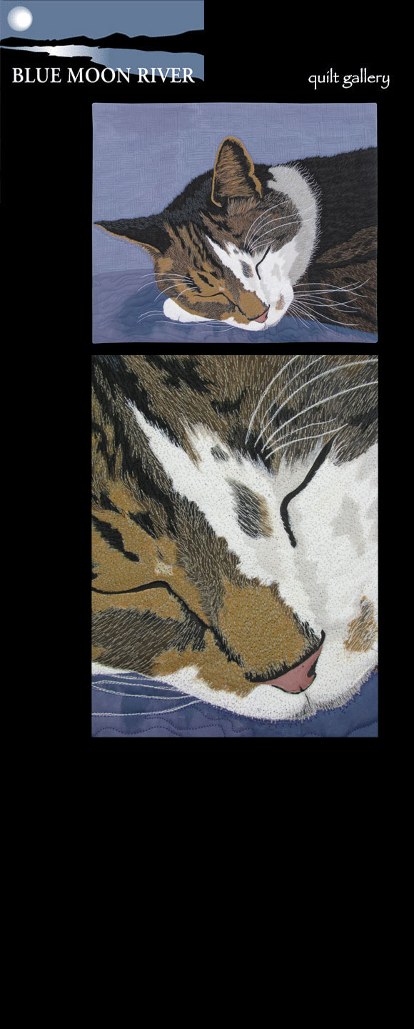 "Susan Brubaker Knapp's cat Maximum, in ""Maximum Cat Nap"""