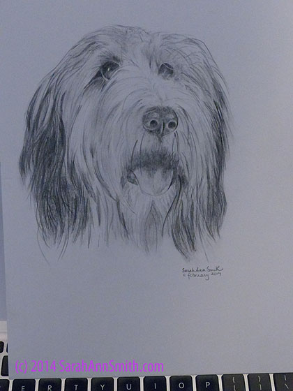 Sweet doggie, in graphite pencil.