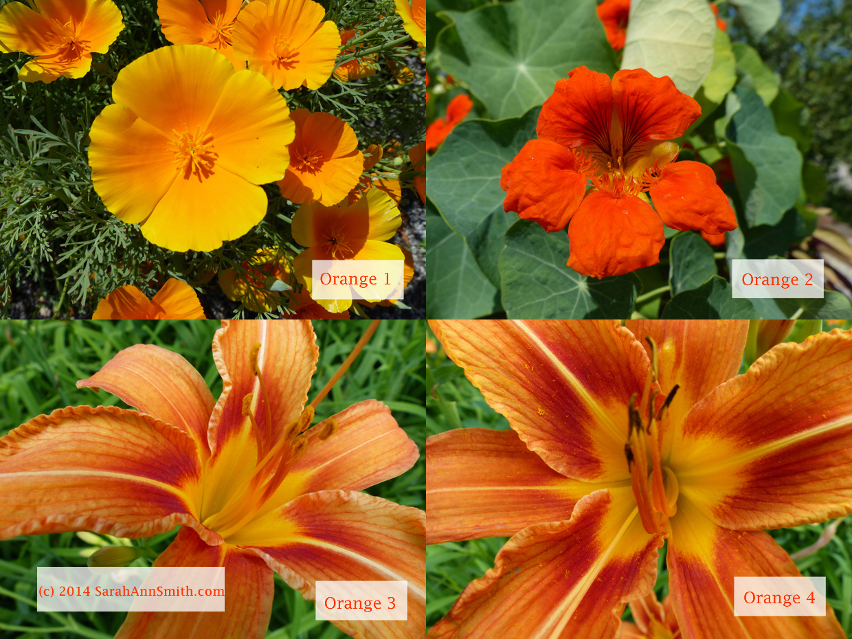 A selection of  popular flowers, but the owner of the local gallery that has sold my work tells me orange doesn't sell, people don't like orange.  What do you think?  I think the lily would be a fabulous one for the exercise, but....