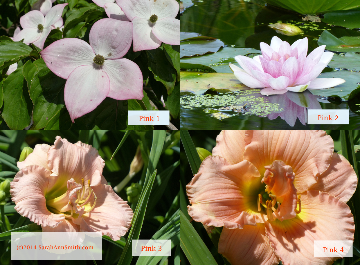 Dogwood, Water Lily, apricot Lily, closer view of apricot colored Lily