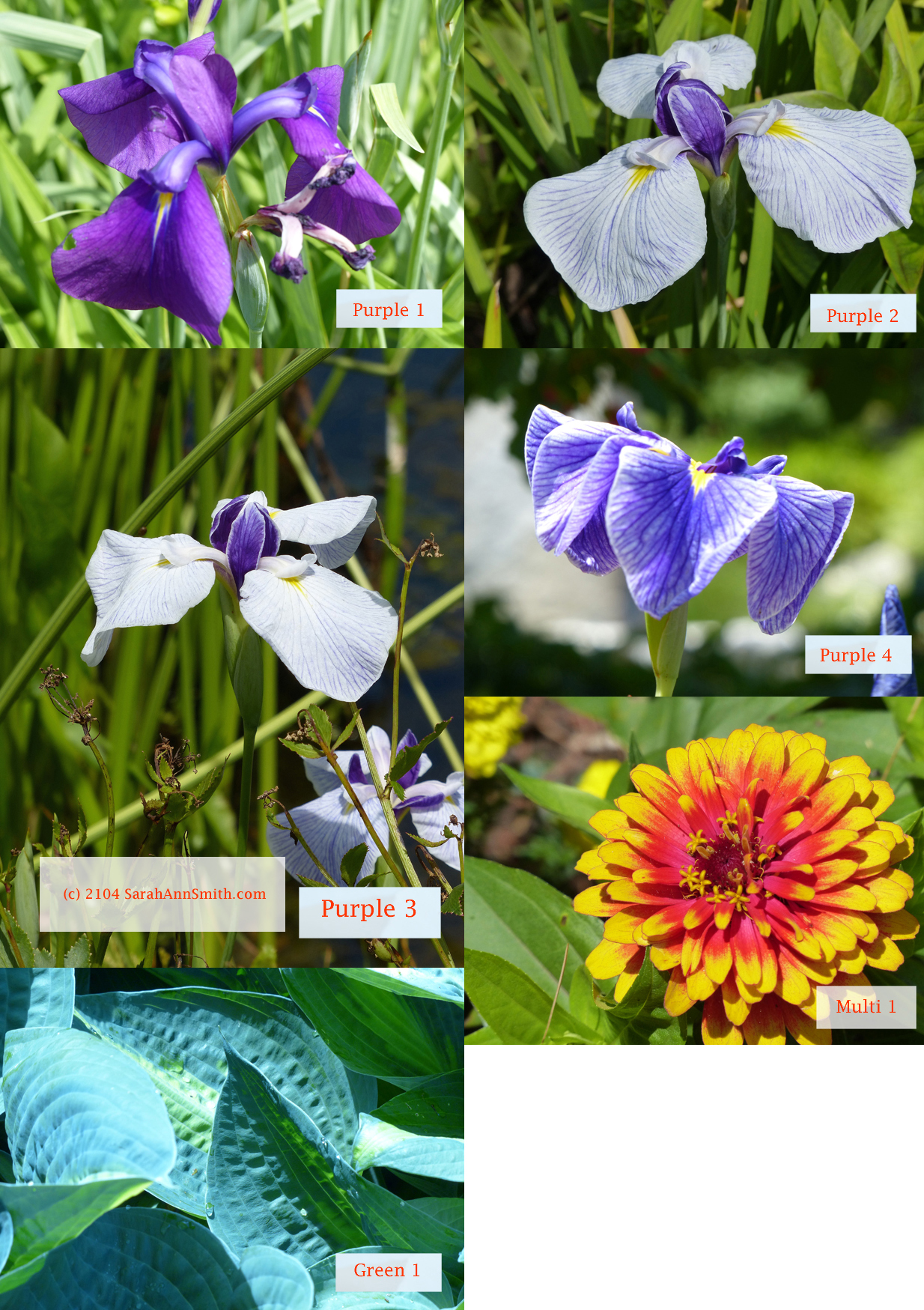 Purple, Multi and Green images