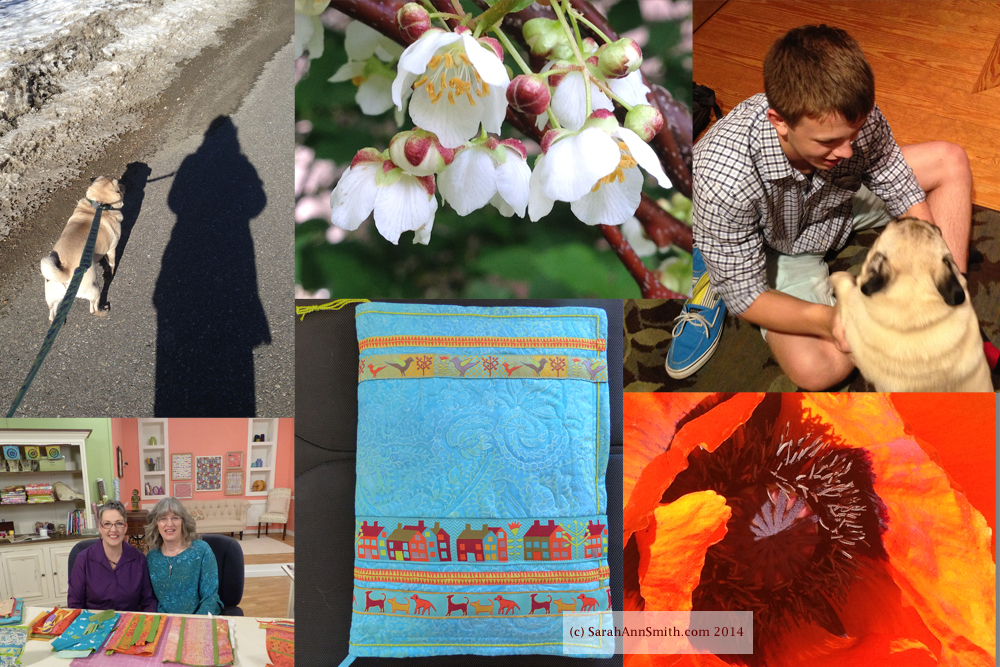 Creativity, Inspiration, and Quilting Arts TV Series 1400, Clockwise from top left: Dog Walkies with Pigwidgeon (winter), Kiwi blossoms (garden), Eli home from camp (family), Poppy (garden), Notebook cover, On the set with Susan Brubaker Knapp, taping my Easy-peasy Inside-Out Bag
