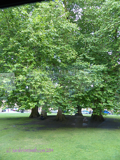 In Bath, our guide had the bus stop at the top of the hill so we could walk down to the center of town.  He said these trees were planted July 4, 1776.  Not sure how they know that, but the ring of trees must date to about them.  They are in a circle in the center of Georgian homes on a circular area/park-let.