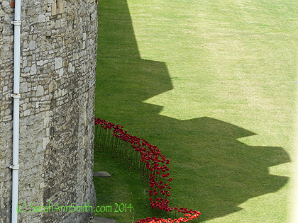 A most stunning artwork-in-progress at The Tower to commemorate those slain in World War 1, as this is the centennary anniversary of the start of that war.   Learn more about this Fields of Blood installation here.