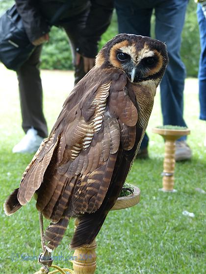 That Asian owl.  Glorious!