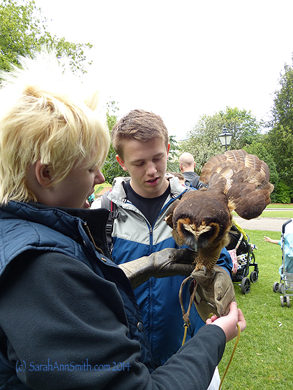 The owl is getting acquainted with Eli (wearing a gauntlet), his handler helping.
