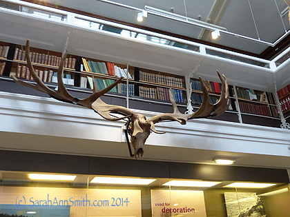 And LOOKIT these massive antlers!