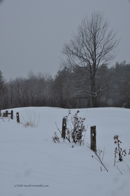 Looking West-Northwest to the pergola/walk-through to the big meadow.  There was a falling down fence when we moved in 4 years ago that is now pretty much fallen, but the posts are good snow-depth markers.