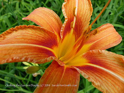 The Close up of the wild Day Lily, also used in the workshop. (c) Sarah Ann Smith.  PS:  Sorry about all the watermarking and copyright notices--after the incident where someone created derivative copies of my work, I'm being even more  diligent about marking stuff.  So sad to have to do this!
