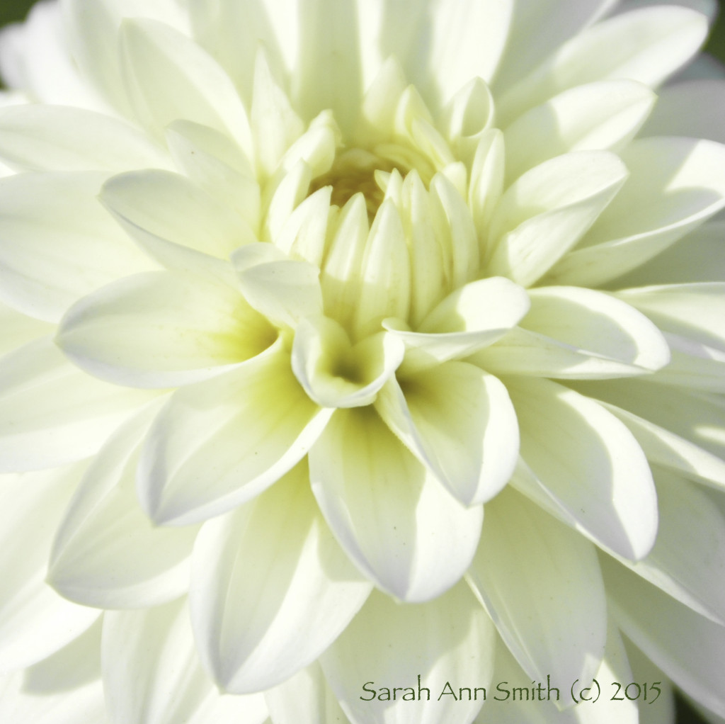 Flower.   Duh!